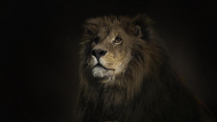 lion_shadow_big_cat_predator_51619_1920x1080.jpg