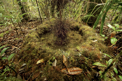 roots and moss 5