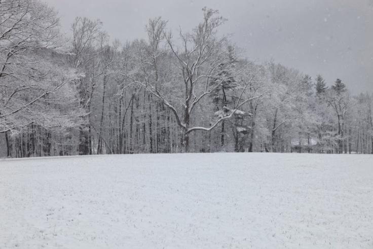 snowy field.JPG