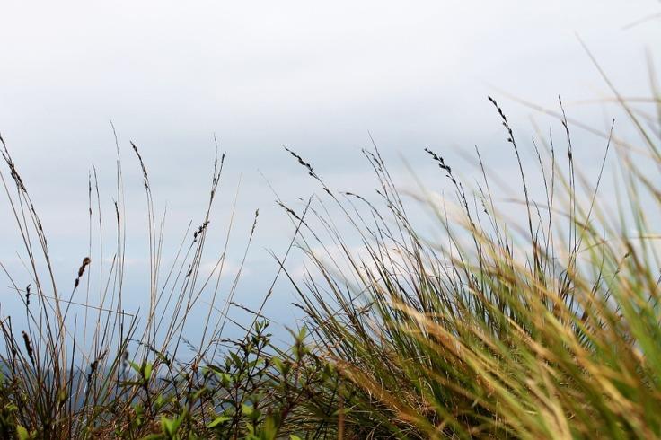 tall-grass-263393_960_720.jpg