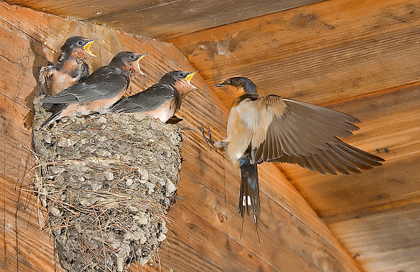three-hungry-mouths-to-feed